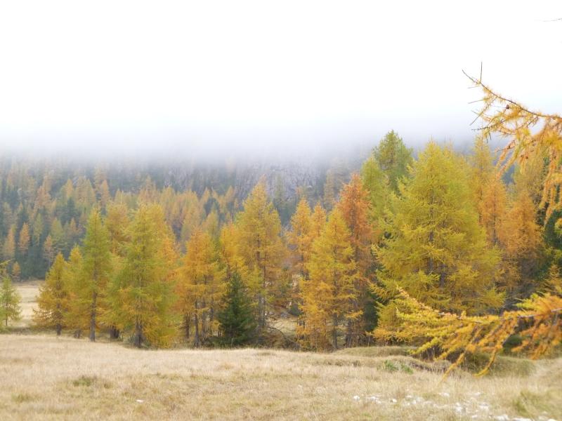 I larici in autunno uno spettacolo della natura for Le pigne dei larici