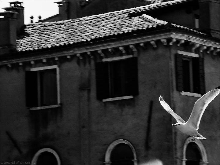8636-gabbiano-venezia.jpg